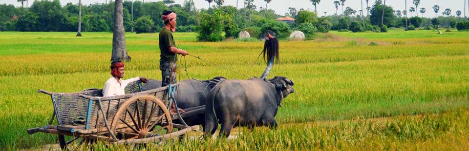 Vietnam Travel Online