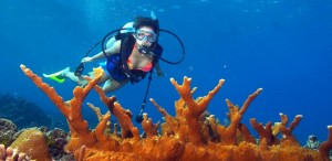 Diving in Sihanoukville