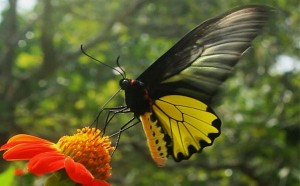 """Kep Butterfly Farm – a """"worth to visit"""" destination in Kep, Cambodia"""