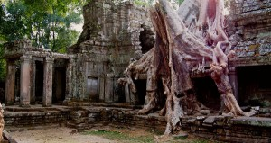 Spung tree at Preah Khan Temple