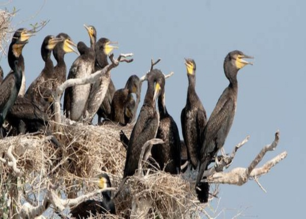 Prek Toal Bird Sanctuary has a significant number of rare breeds gathered