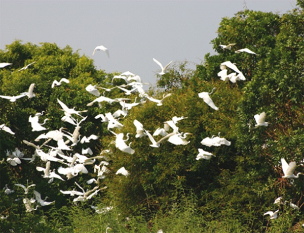 Visitors during the dry season will find the concentration of birds like something out of a Hitchcock film