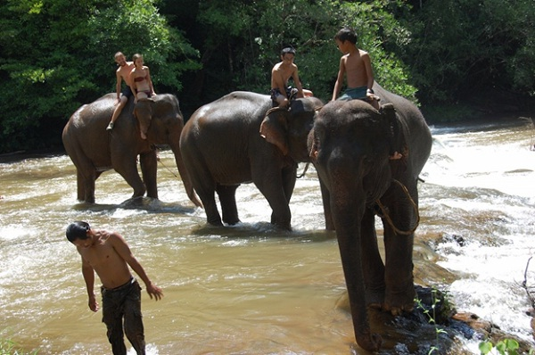 """Elephants are """"green"""" mean of transportation"""