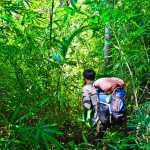 Go trekking in the evergreen forest is a favorable activity of foreign tourists