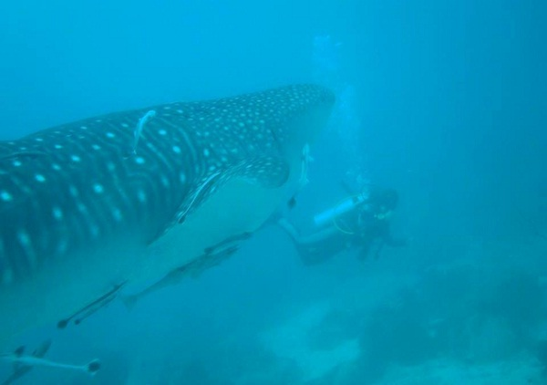 Diving at Koh Tang