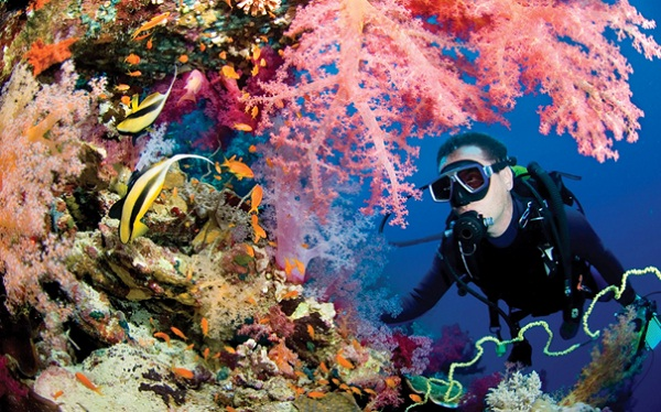 Koh Rong Island also attracts travellers with its rich marine ecosystem