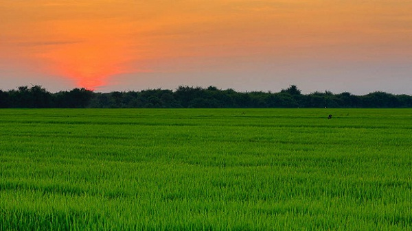 Sunset in Siem Reap's countryside