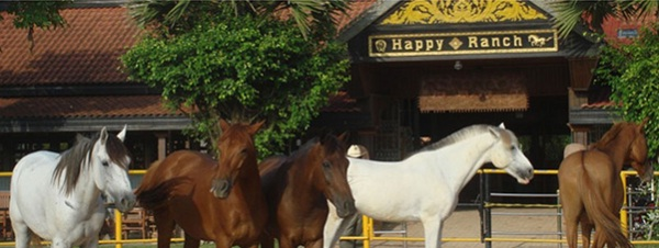 Well-cared horses