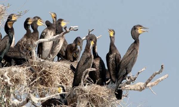 Birds in Prek Toal Bird Sanctuary
