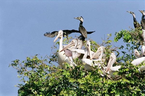 Prek Toal Bird Sanctuary
