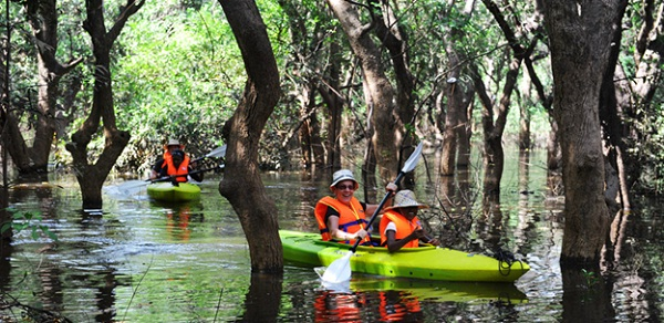 Kayaking through mangroves of Kampot, Cambodia