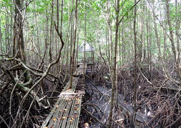 Peam Krasaop Mangrove Sanctuary