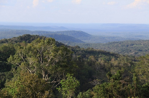 Forest in Mondulkiri Province