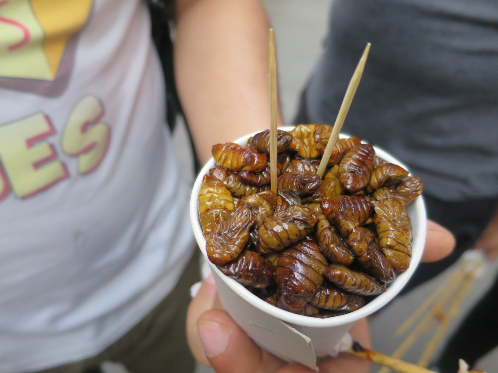 Fried silkworms are served in small cups to go