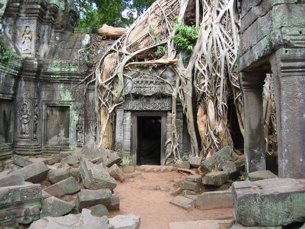 The roots has spread freely in Ta Prohm temple