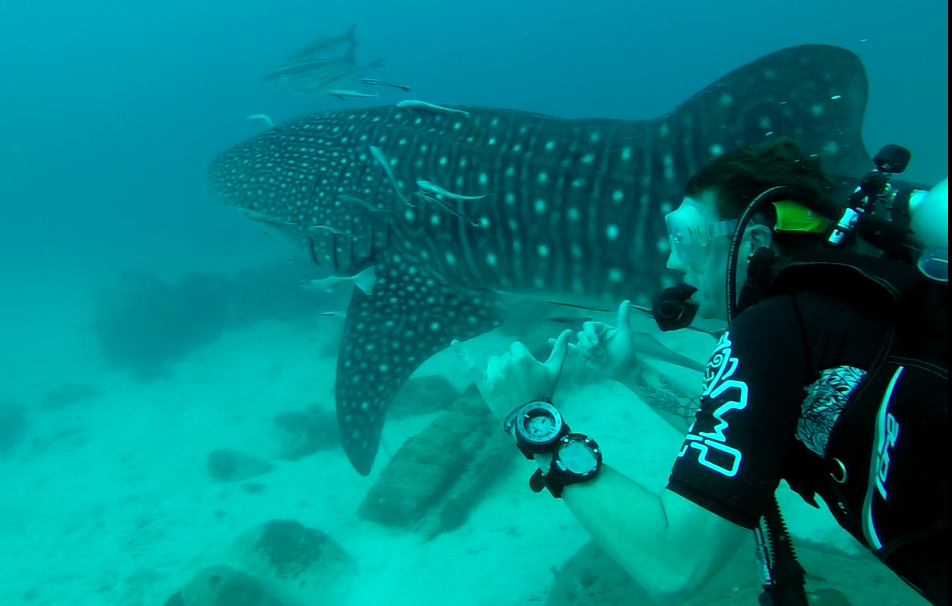 Enjoy the beauty of the sea in Koh Rong via diving