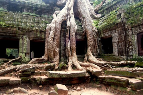 Ta Prohm is more mysterious thanks to wild trees wrap around it