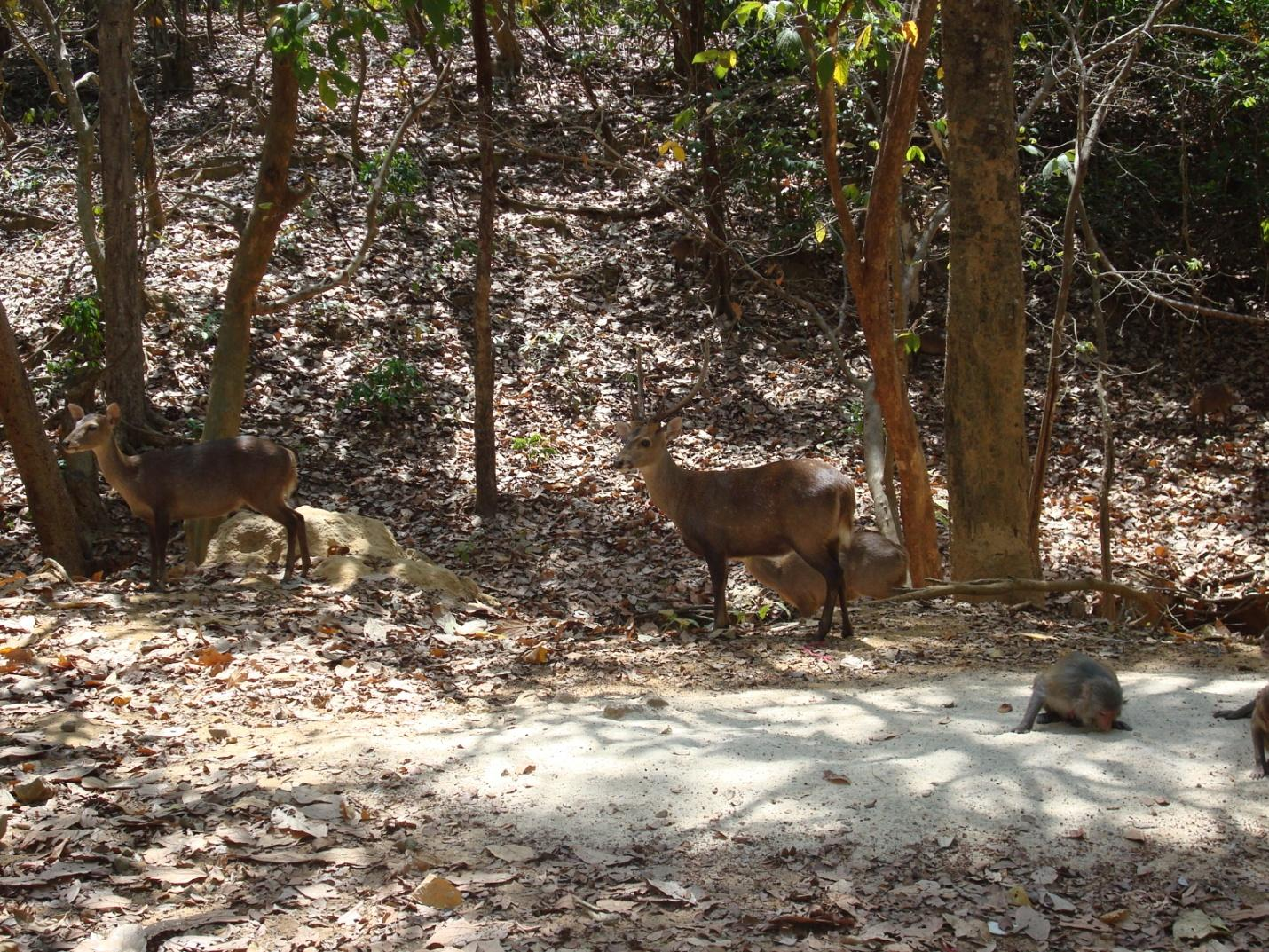Wildlife in Hlawga National Park