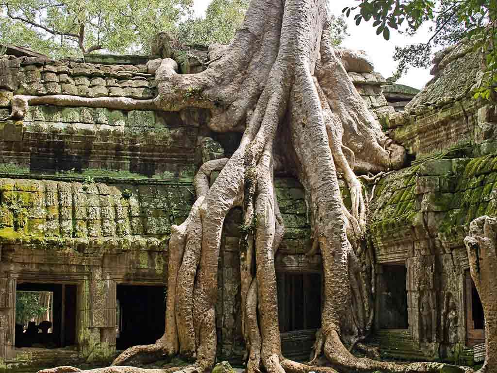 Ta Prohm is impressed with gigantic roots