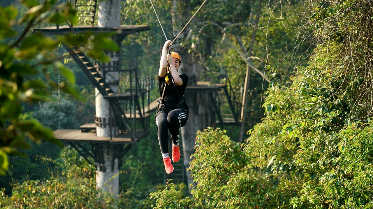 Soaring on treetop over Angkor Park