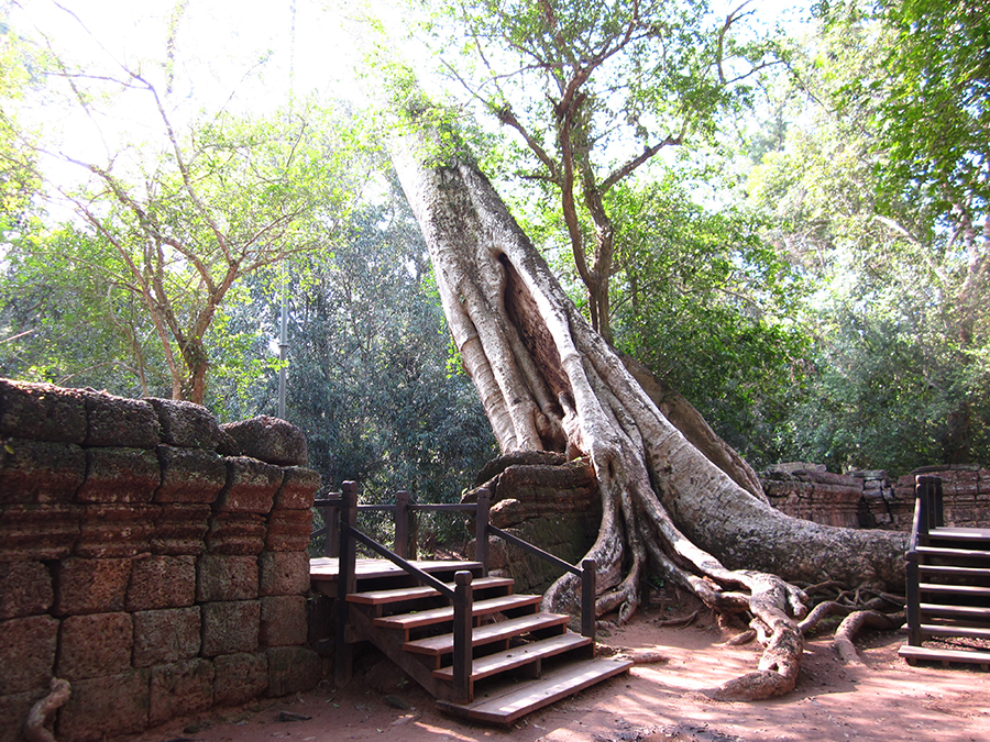 Ta Prohm – the temple of exotic tree root