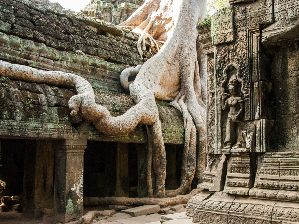 Ta Prohm makes people feel and respect wonderful power of nature