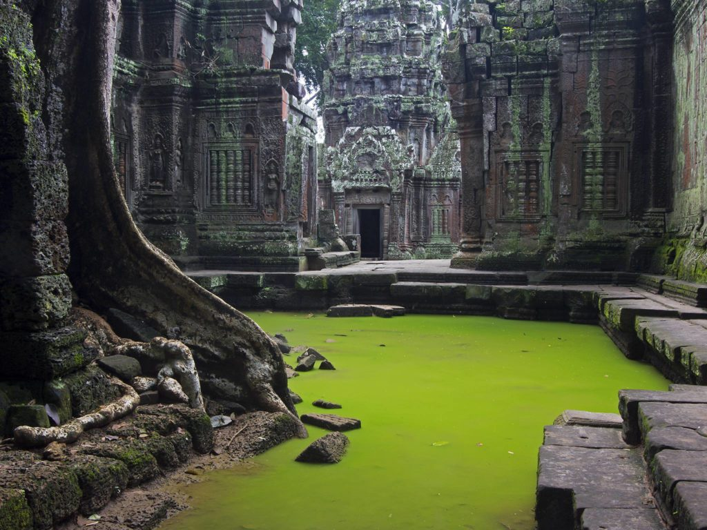 The best time to experience the beauty of Ta Prohm is in the early morning